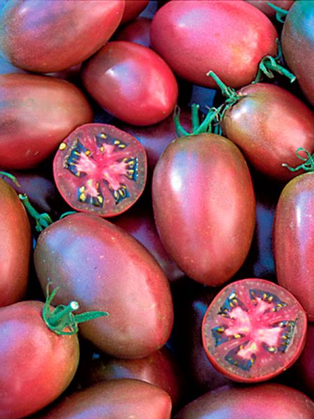 Tomate purple russian